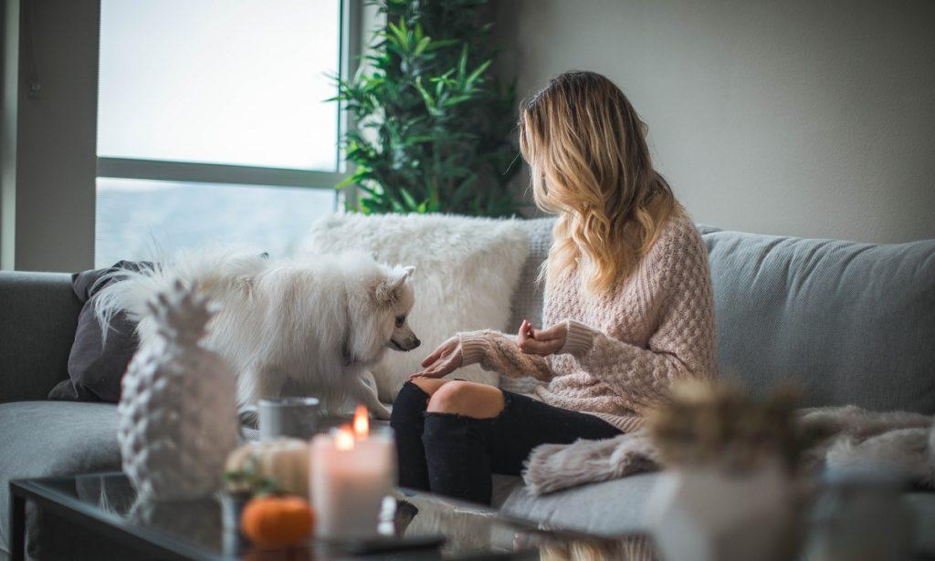 Nuori nainen istuu sohvalla valkoisen koiran kanssa asumisoikeusasunnossaan