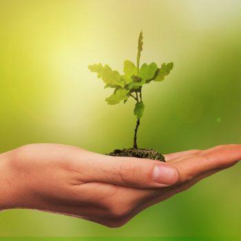 Käsi pitelee pientä vihreää versoa