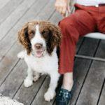 Iloisen näköinen koira istumassa isäntänsä vierellä