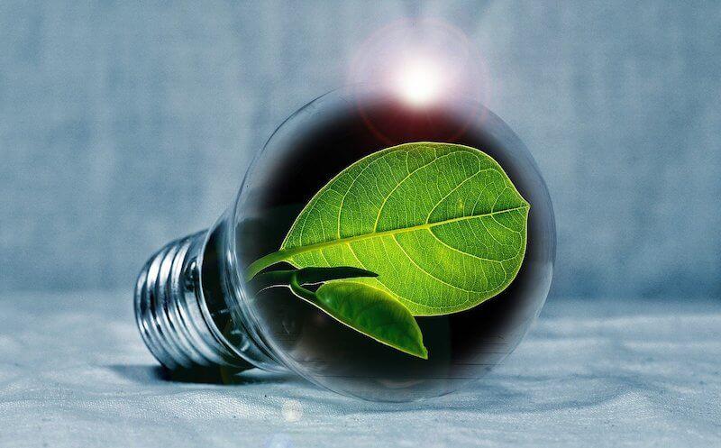 lamppu, jonka sisällä kasvaa vihreä kasvi